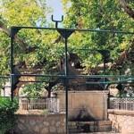 Kos: the Plane (Platanos) tree of Hippocrates