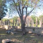 Archaeological site in Olympia